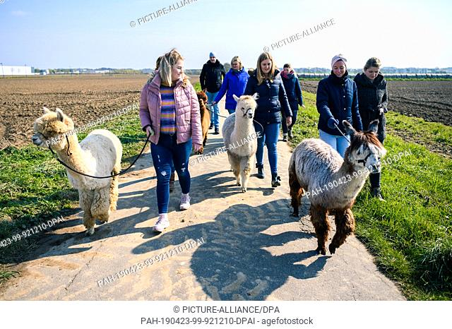 """14 April 2019, Lower Saxony, Drantum: A group of people go for a walk with llamas and alpacas. On their farm """"""""Herzog-Alpakas"""""""" a family offers photo shoots and..."""