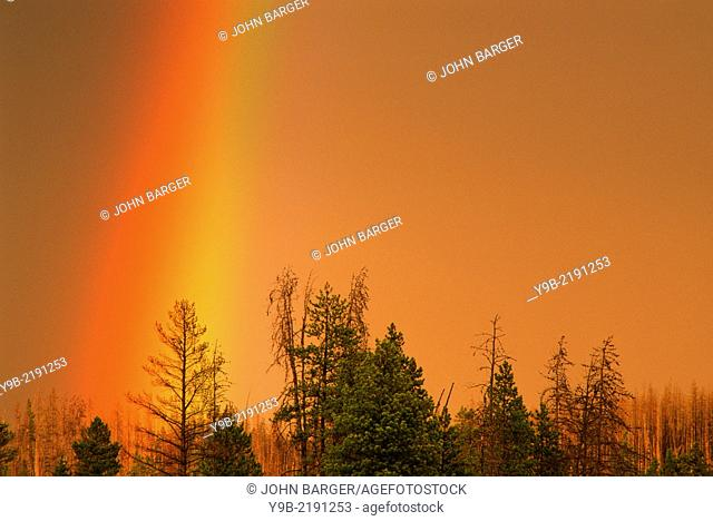 Rainbow over conifers at sunset, near Firehole River, Yellowstone National Park, Wyoming, USA