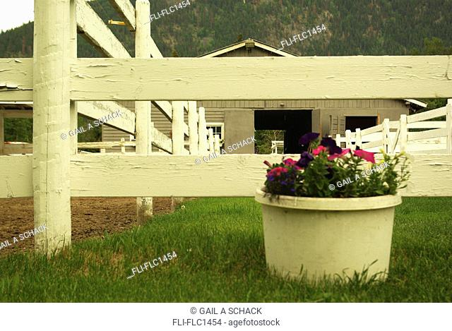 White paddock fence of horse stable and flower pot, Barriere, B.C., Canada
