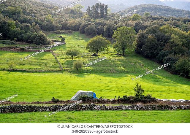 Campos en Cantabria. España. Europa