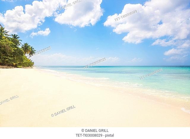 Dominican Republic, Palm trees growing on tropical beach