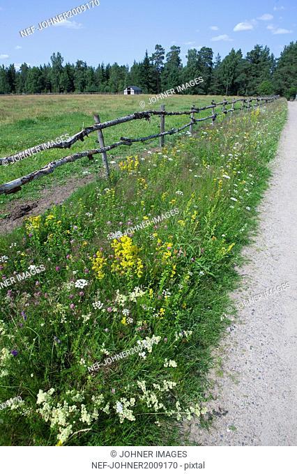 Wildflowers on roadside