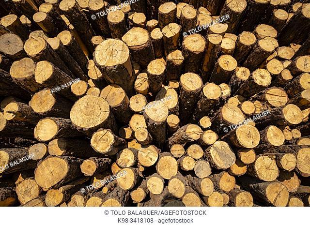 Lumber industry, Cabrejas del Pinar, Soria, Autonomous Community of Castile-Leon, Spain, Europe