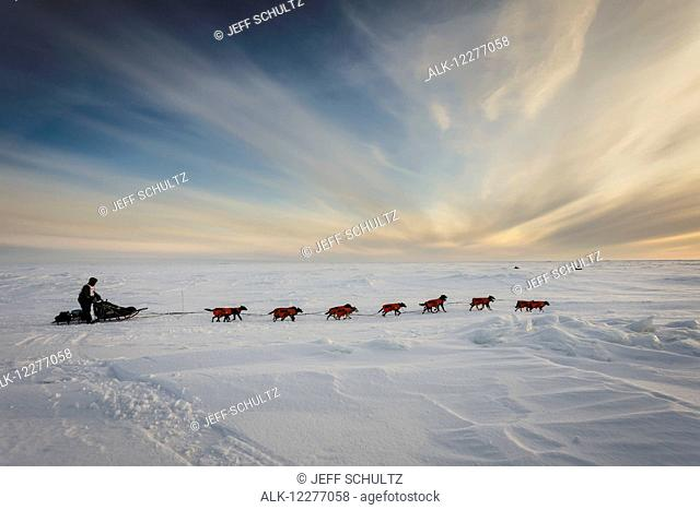 Ken Anderson several miles from the Nome finish line near sunset during Iditarod 2015