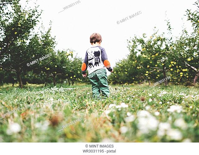Rear view of young boy with brown hair wearing printed shirt and green trousers standing in an apple orchard