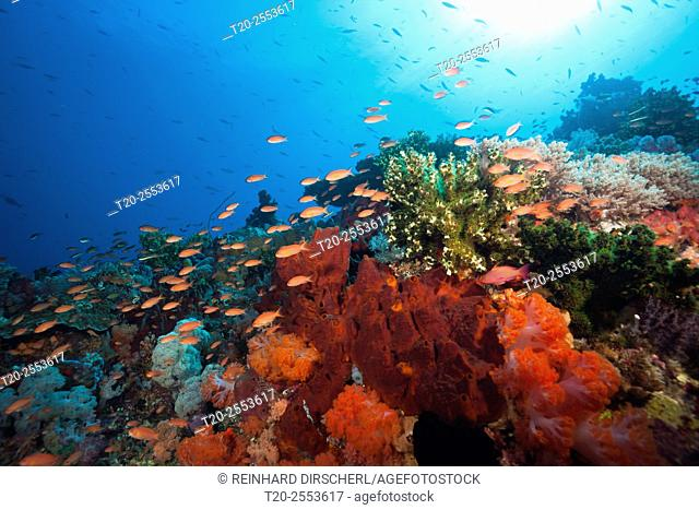 Colored Coral Reef, Komodo National Park, Indonesia
