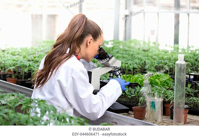 Young pretty woman agronomist in white coat sitting at microscope and supervising seedling's growth in greenhouse. Plant care and protection concept