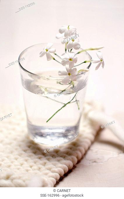 Jasmin flowers in a glass of water