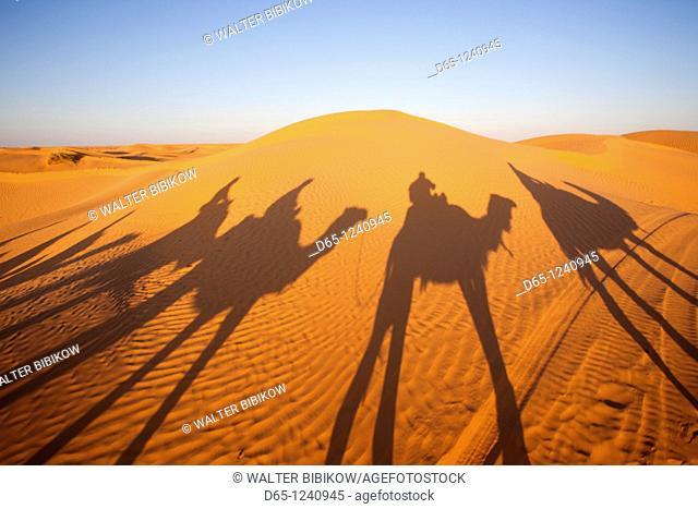 Tunisia, Ksour Area, Ksar Ghilane, Grand Erg Oriental Desert, camel caravan, sunset