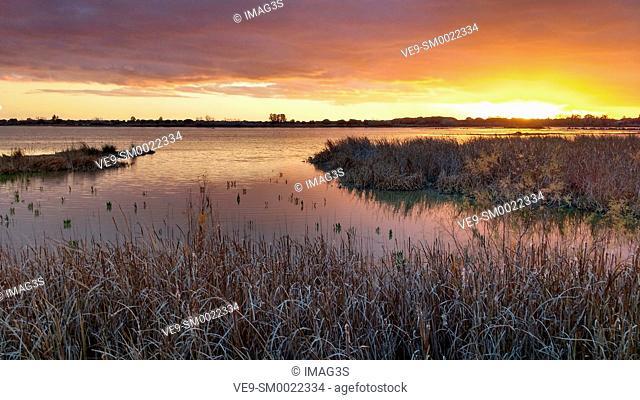 Marsh Madre de las Marismas de El Rocío, Doñana National Park, Almonte, Huelva province, Spain