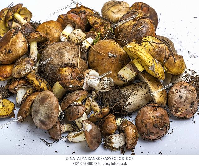 fresh edible forest mushrooms on a white background, Suillus luteus and Boletus edulis, top view