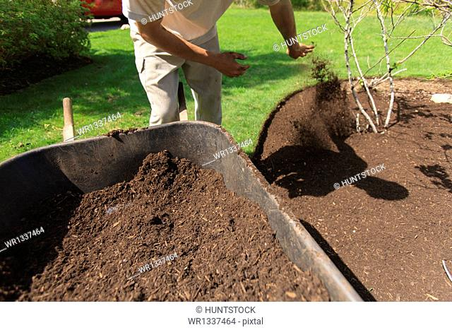 Landscaper mulching a garden using a wheelbarrow
