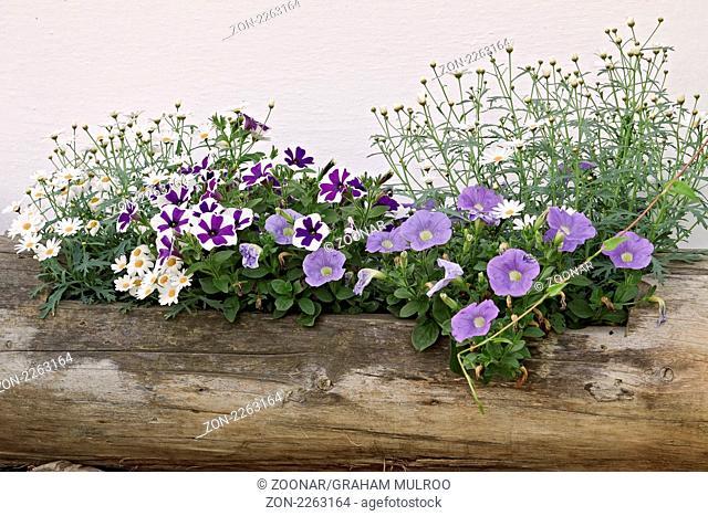 Austria Kitzbuhel Flower Arrangement