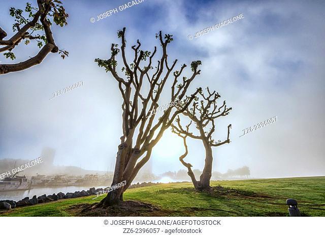 Trees at Embarcadero Marina Park on a foggy morning. San Diego, California, United States