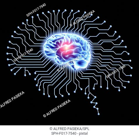 Human brain on brain-shaped printed circuit board. Conceptual computer artwork depicting artificial intelligence