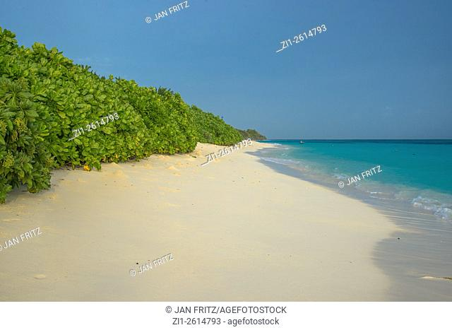 sandy beach with vegetation and clear blue sea at Thaddoo at the Maladives