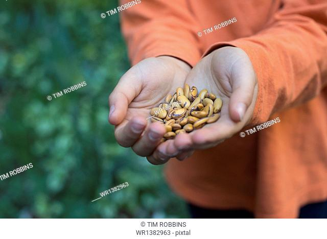A young boy holding out a handful of dried pulses
