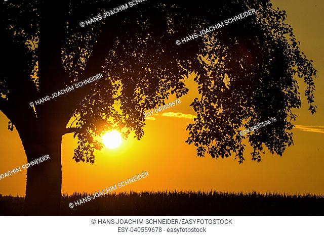 sunset in summertime with tree in Germany