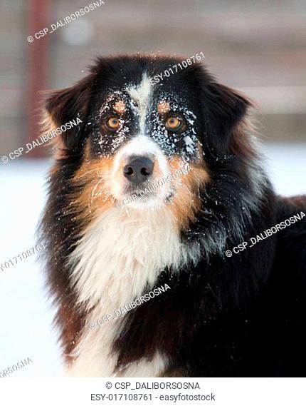 dog from snow