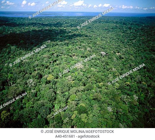 Amazon River. Rio Negro. Brazil