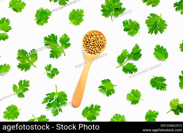 Coriander seeds with fresh leaves isolated on white background