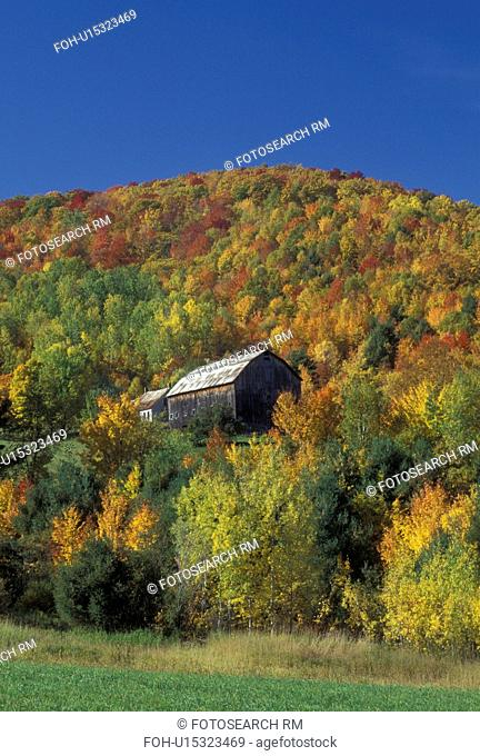 barn, fall, Barnet, VT, Vermont, Brown barn surrounded by colorful fall foliage in Barnet in the autumn