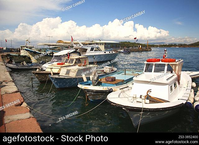 Traditional fishing boats at the pier in Burgazada island with flowers in the foreground, ancient Antigoni, Prince Islands, Istanbul, Marmara Region, Turkey