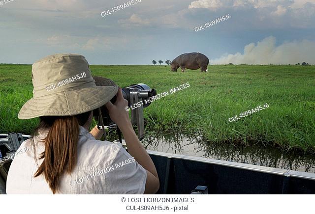 Woman photographing Hippopotamus from safari truck, Kasane, Chobe National Park, Botswana, Africa