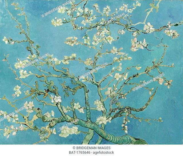 Almond Blossom, 1890 (oil on canvas), Gogh, Vincent van (1853-90) / Van Gogh Museum, Amsterdam, The Netherlands / Bridgeman Images
