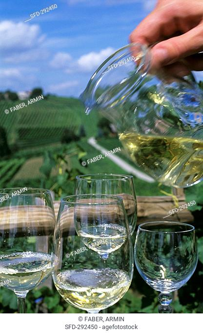 Pouring white wine, vineyards in background, Slovenia