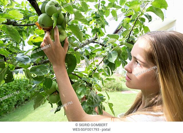 Teenage girl picking an apple in a garden