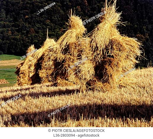 Poland. Beskid Niski mountains. Stacks. Harvest time