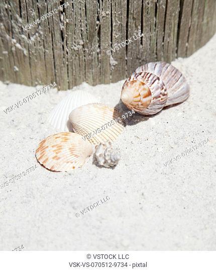 USA, Florida, St. Petersburg, Seashells on sandy beach