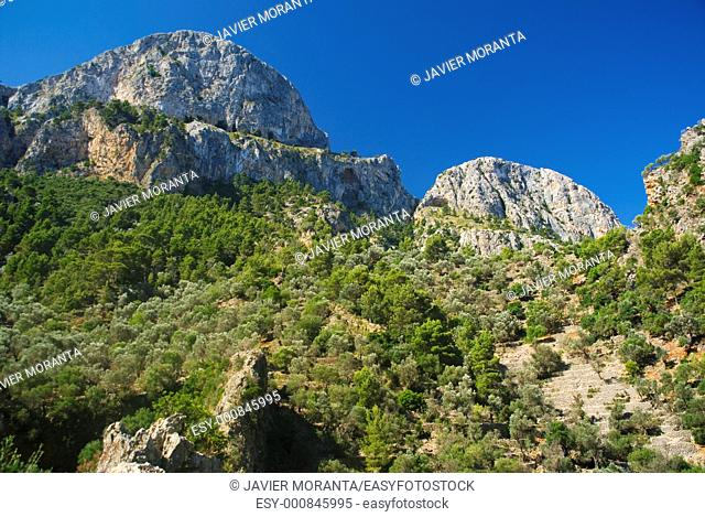 Cornadors, ravine of Biniaraix, Majorca, Balearic Islands, Spain
