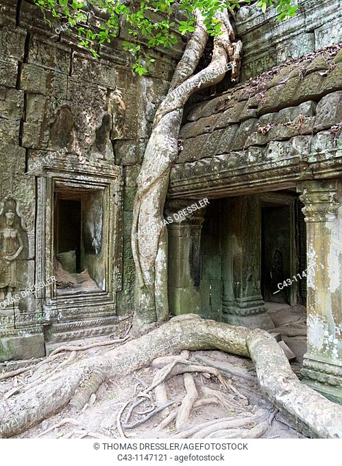 Cambodia - The roots of a Kapok tree Ceiba petandra invade a portico at the Ta Prohm temple in Angkor, supporting the monument and destroying it at the same...