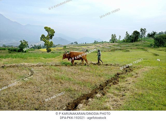 Farmer Ploughing Field Kanthalloor Kerala India Asia