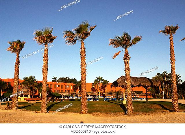 General view of a hotel with palms from the beach of Los Cabos, Baja California, Mexico, Latin America