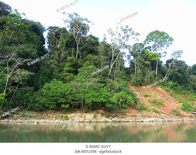 Forested river banks along the Alto Madre de Dios River in Lower Amazon rainforest in Madre de Dios department in Peru