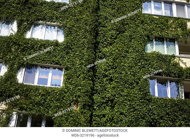 Detail of an ivy-covered apartment block in Berlin, Germany