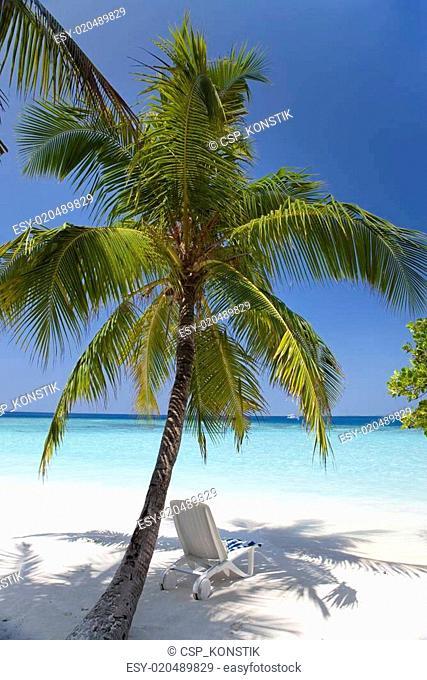 Palm tree on a sandy beach at the cyan sea. Maldives