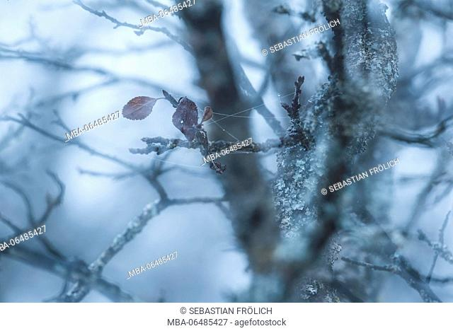 Double exposure of two remained leaves by the branch tangle of a scattered fruit-tree