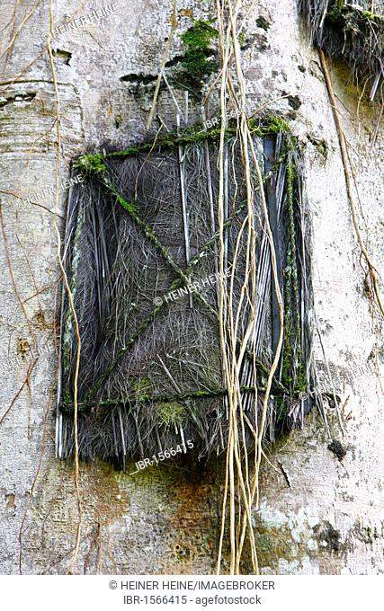 Tree tomb, Toraja culture, Sulawesi, Indonesia, Asia