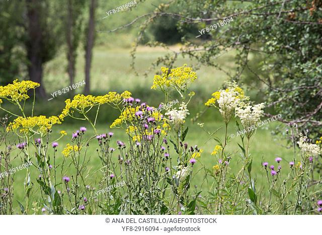 Wild nature in Alcala de la Selva Teruel muntains Aragon Spain