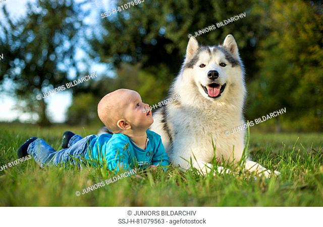 Siberian Husky. Adult dog lying on a meadow, next to a baby. Germany