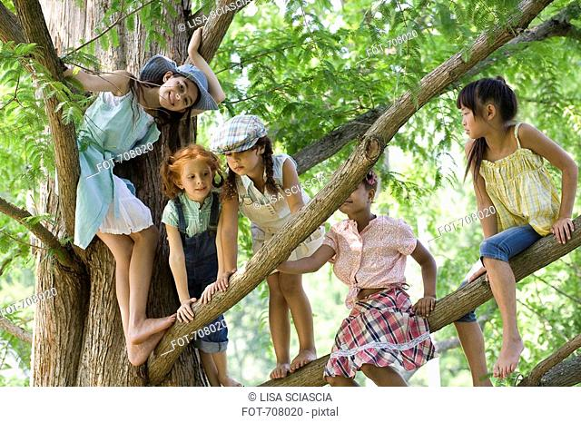 Five young girls in a tree