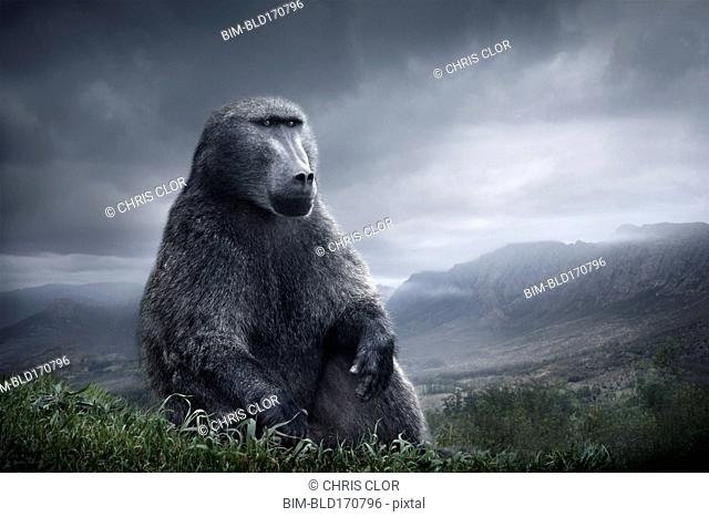 Baboon sitting on hilltop over remote landscape