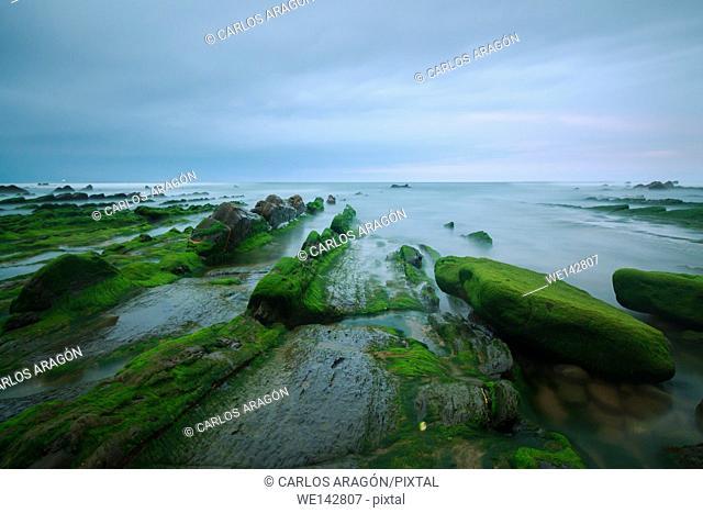 Green seaweed on rocks in Barrika beach, Basque Country, Spain