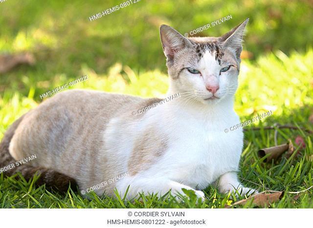 Brazil, Mato Grosso, Pantanal area, domestic cat