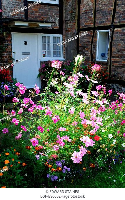 England, Buckinghamshire, Turville, Flowers in the sun outside traditional cottage. Turville is Anglo Saxon meaning 'dry field'