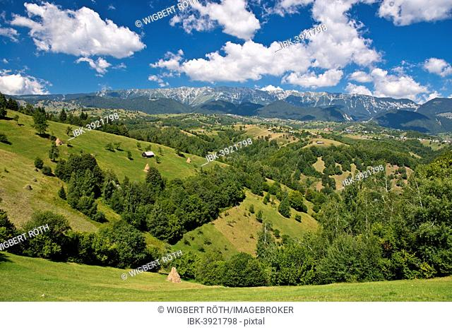 Mountain landscape with meadows in front of mountains, Carpathians, Romania